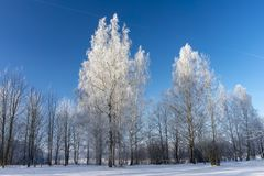 Winter wonderland with snow covered branches. On deciduous trees and blue sky royalty free stock photo