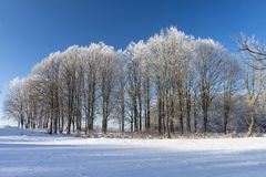Winter wonderland with snow covered branches. On deciduous trees and blue sky stock images