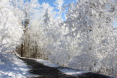 Winter wonderland royalty free stock photography
