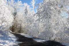 Winter wonderland. Snow covered forest winter wonderland stock photos