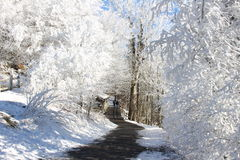 Winter wonderland. Snow covered forest winter wonderland trail Royalty Free Stock Photos