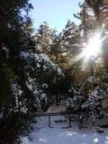 Winter wonderland! stock images
