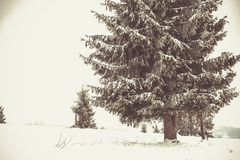 Winter Wonderland landscape, snowy fir tree background. Winter Wonderland snow on trees landscape stock photo