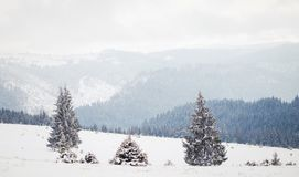 Winter Wonderland landscape, snowy fir tree background royalty free stock photography