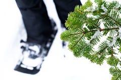 Winter wonderland Royalty Free Stock Photos