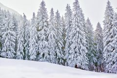 Winter wonderland with snowy trees and mountains. Winter wonderland frozen landscape with snowy fir trees, mountains and snow field. Spectacular alpine wallpaper Royalty Free Stock Image