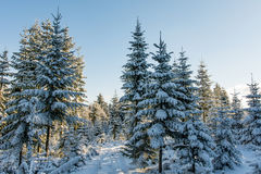 Winter wonderland. Snowy white forest and blue sky royalty free stock images