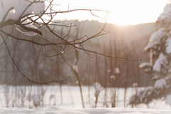 Winter wonderland. The sun kisses this wonderful white winter scene. Snow everywhere Stock Photo