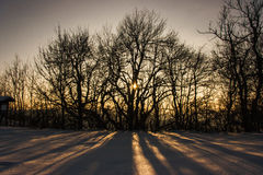 Winter Wonderland. Sunset behind the Trees make Shadows on Snow Royalty Free Stock Photo