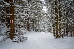 Winter wonderland trail with trees covered in fresh snow and knee deep powder. Hiking path in Piatra Mare Carpathian mountains. Romania, during a Winter walk stock images