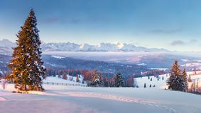 Beautiful winter landscape. Zakopane, Poland. Winter wonderland. Vivid winter panorama with mountains and spruce forest. Beautiful winter landscape. Zakopane stock photos