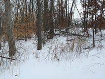 Winter wonderland Royalty Free Stock Image