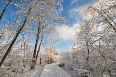 Winter wonderland. Walking in a winter wonderland in East Grand Rapids Michigan Royalty Free Stock Image