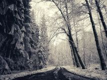 Winter Wonderland. Forest Royalty Free Stock Images