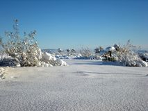 Winter wonderland. Yucca Valley, California Stock Photography