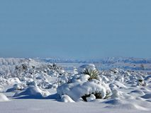 Winter Wonderland. Yucca Valley, California Royalty Free Stock Photography
