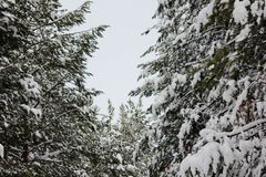 Winter wonderland in wood royalty free stock photo
