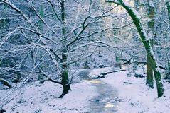 Woodland trail with ice and snow. Winter wonderland of a woodland trail with an ice and snow covering everywhere Royalty Free Stock Image