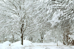Winter Wonderland XI. Black and white trees covered with fresh snow stock photo