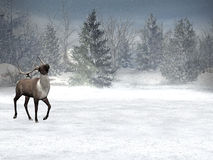 Winter wonderland, xmas. Winter, xmas landscape with reindeer in foreground,  copy space for wishes Royalty Free Stock Photography