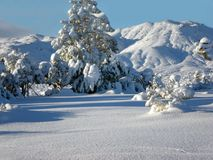 Winter Wonderland. Yucca Valley, California Royalty Free Stock Photo