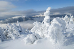 Winter wonders Royalty Free Stock Photos