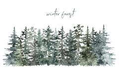 Winter forest background with pine and spruce trees on white backdrop. Christmas and New Year template