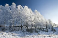 Winter wood. Royalty Free Stock Images