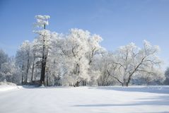 Winter in wood. In frosty sunny day Royalty Free Stock Photography