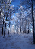WINTER wood Stock Photo