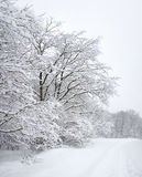 Winter wood. Covered with snow Stock Images