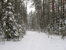 Winter wood Stock Photos