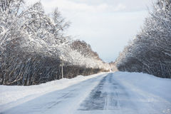 Winter wood. Snow road in the winter wood Stock Image