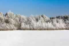 Free Winter Wood Royalty Free Stock Photography - 21336457