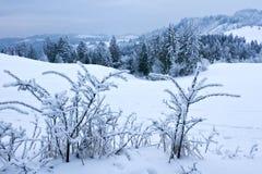 Winter wood Stock Image