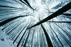 Winter wood Royalty Free Stock Photo