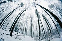 Winter wood Stock Photo