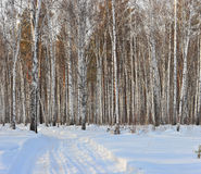 Winter wood Royalty Free Stock Image