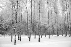 Winter wood. Royalty Free Stock Photo