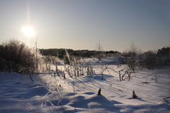 Winter wood. In a winter wood in solar frosty day Stock Image
