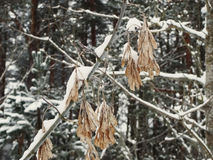 Winter wood Royalty Free Stock Photography