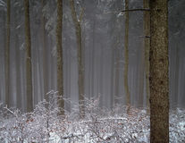 Winter Wood Fog. Mysterious and magic nebulous forest in winter Stock Images