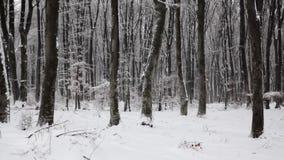 Winter wood stock footage