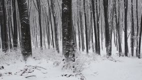 Winter wood stock video