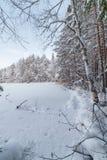 Winter wood lake Royalty Free Stock Photography