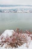 Winter at Wood Lake with Berry Bush Royalty Free Stock Photo