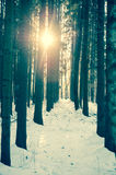 Winter wood landscape Royalty Free Stock Photography