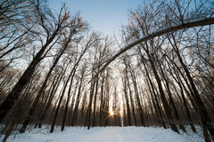 Winter wood landscape Royalty Free Stock Photo