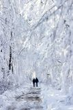 Winter wood landscape. Clod winter wood landscape covered with snow stock photography