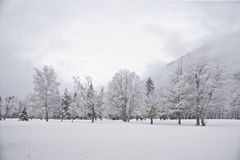 Winter wood landscape. White forest with snow Stock Image